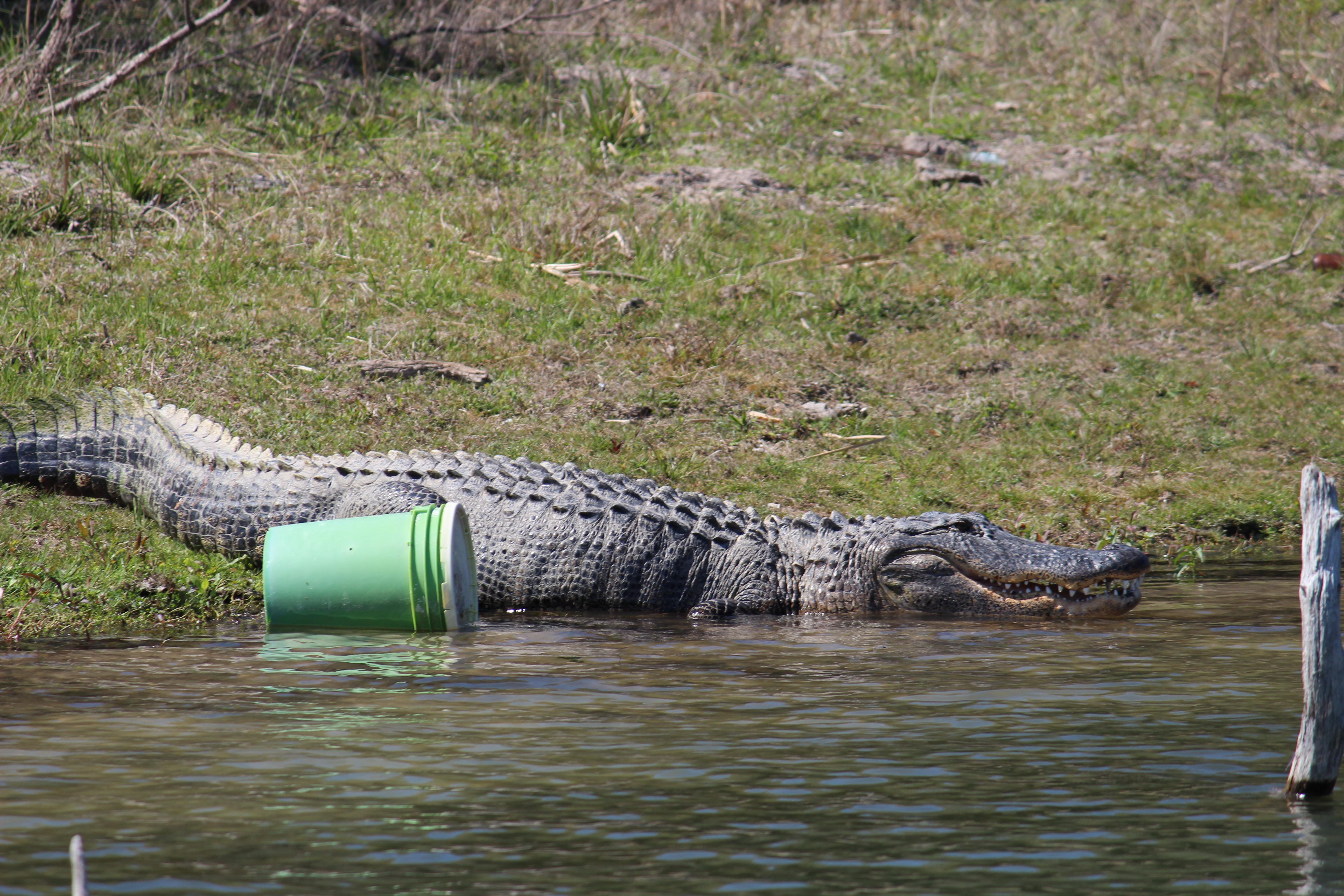 Coleto Creek 3/26/13. | Fish Catching Travel
